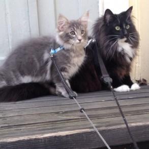 Reea ja Hemmo ensimmäistä kertaa ulkona