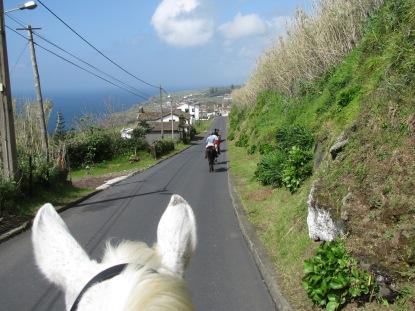 Azoreilla