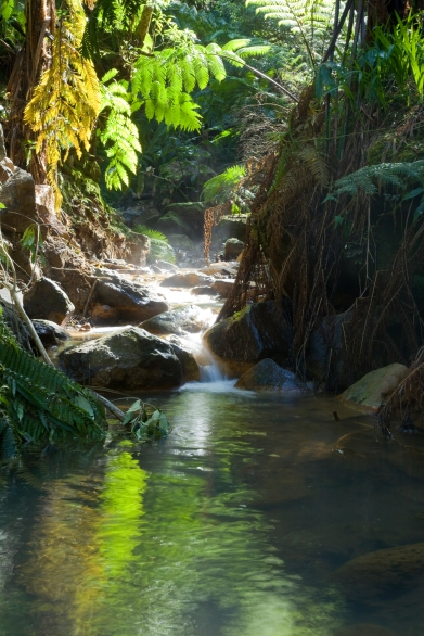 Azores Caldeira Velha (Old springs)