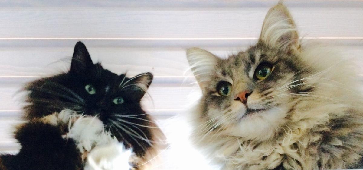 I gatti di Roma, I gatti diEspoo