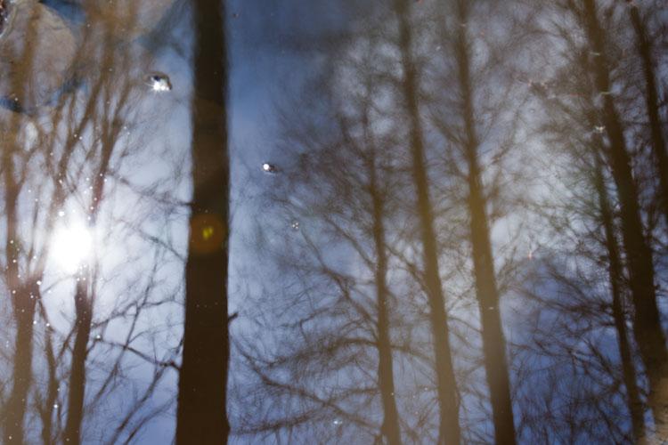 Puut – metsänjättiläiset