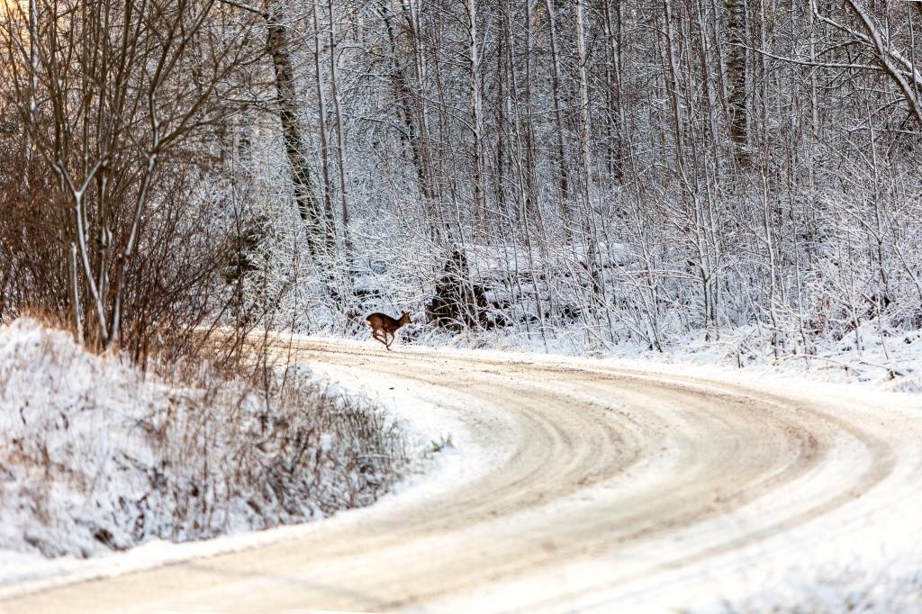 Juokseva peura, talvimaisema
