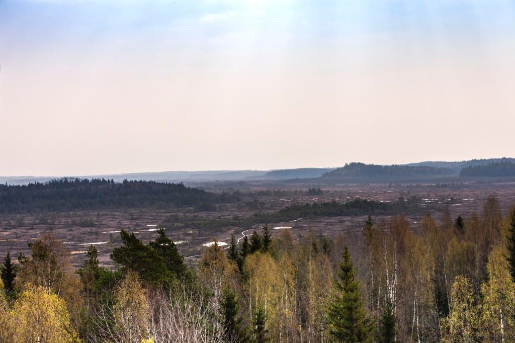 Torronsuon kansallispuisto Tammela