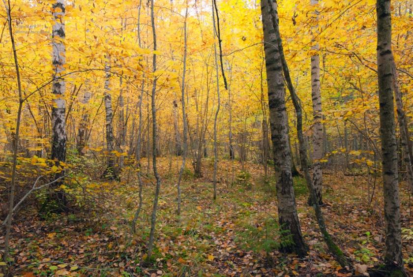 Karkali luonnonpuisto, Karkali nature park