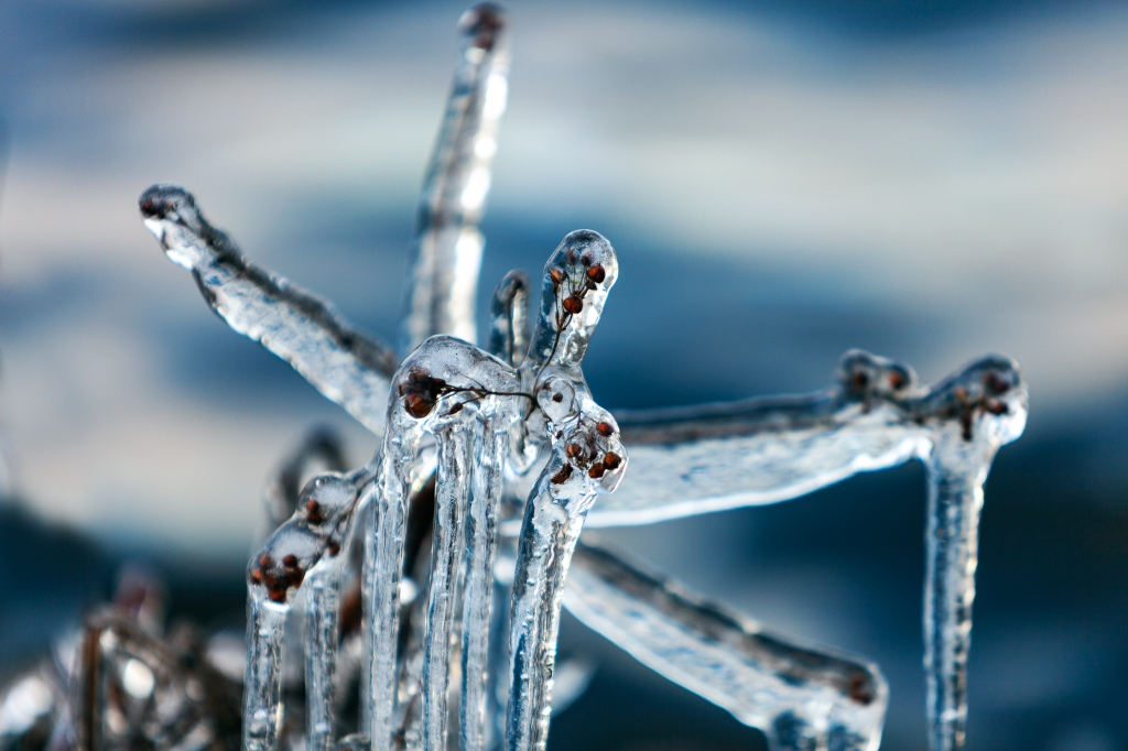 Jäätynyt talvinen kasvi, talventörröttäjä