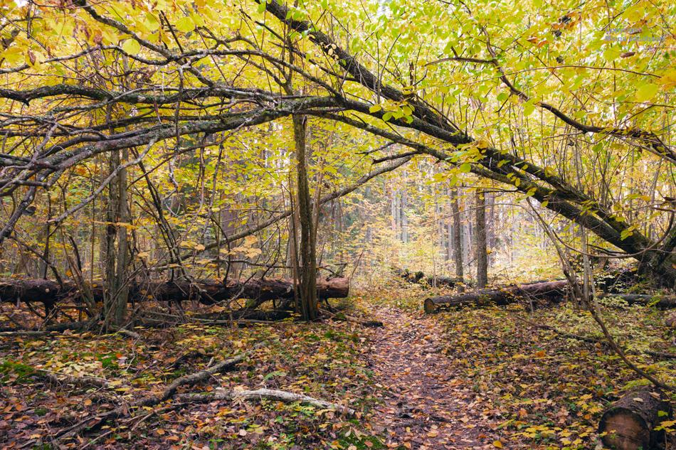 Pähinäpensaslehto, Karkali luonnonpuisto